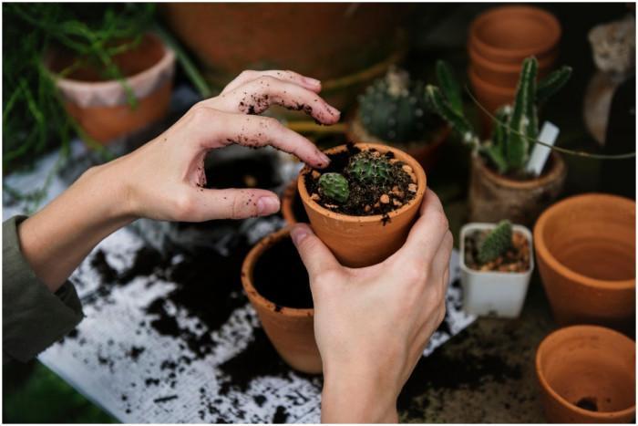 Да торим ли растенията през зимата или пък не?