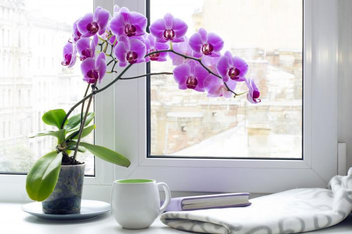 Как да поливаме орхидеята в определени случаи?