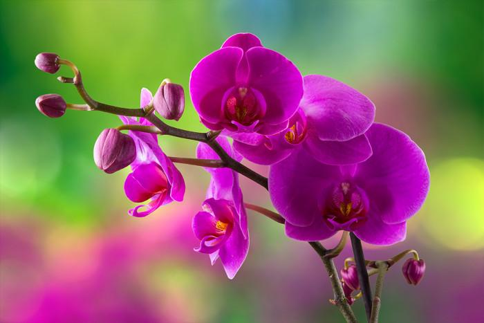Топъл душ - орхидеята го обича