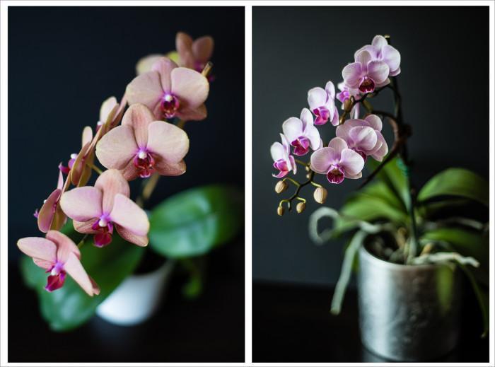 Приспособяване на нова орхидея в дома ви