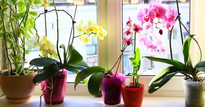 Поливане на орхидеи