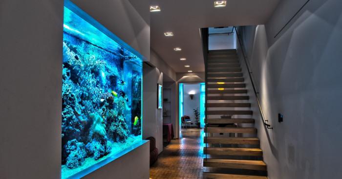Красота и стил в дома с …аквариум – практически наръчник