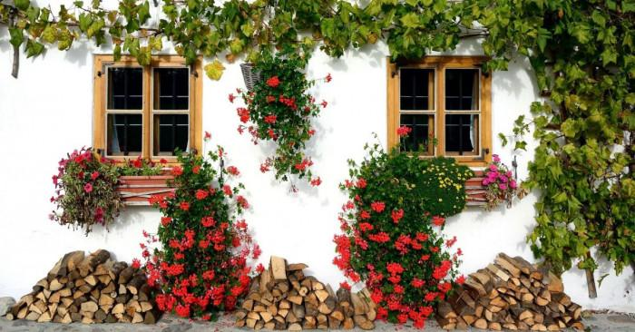 Неустоими увивни растения за всяка градина
