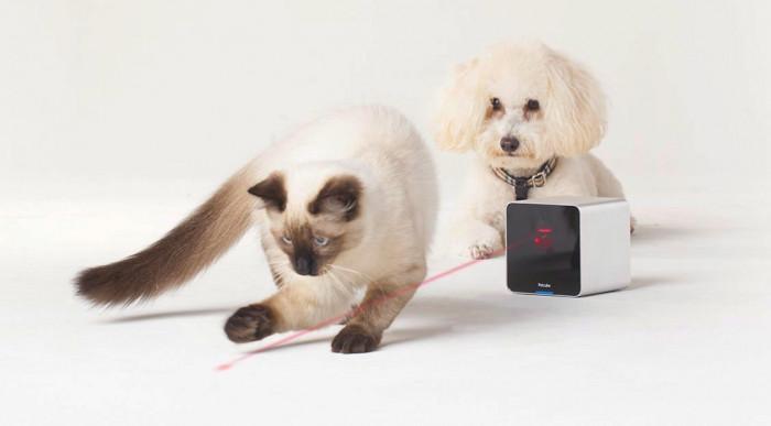 Интерактивно устройство за домашни любимци
