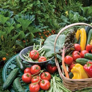 Оберете всички плодове и зеленчуци. Включително и гниещите.
