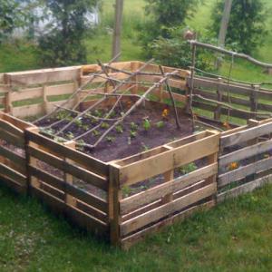 Защита на засадените плодове и зеленчуци с прости дървени огради