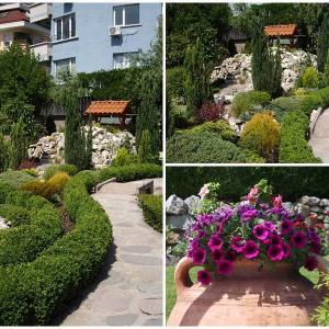 Направете градината по-красива с интересна декоративна растителност