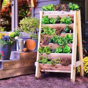 Създайте страхотно местенце за зеленчуците
