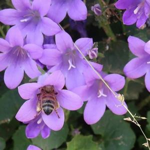 Няколко лични съвета за реализиране на желаната градина с цветя