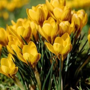 Има ли непретенциозни растения, които са готови да цъфнат още през първите топли дни?