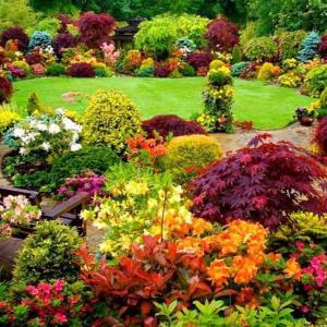 Експлозия от цветове в градината