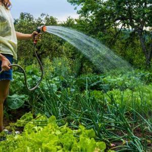 Защо водата е толкова важна за растенията?