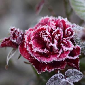 Поливане и торене на стайните растения през зимата