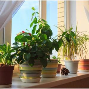 Запазете цветята си свежи и красиви и през зимата