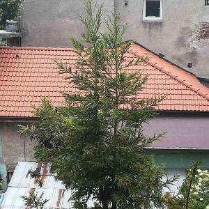 Основен ремонт на покрив