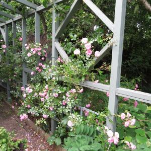 Вашата модерна градина се нуждае от романтиката на розите в английски стил