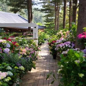 Основни тенденции за неповторима градина през 2020 г. (част първа)