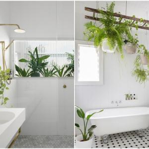 Запълнете помещението с растения